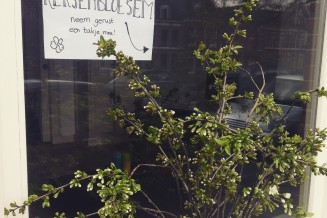 Kersenbloesem in de vensterbank. We hadden het ook op de composthoop kunnen gooien maar uitdelen is leuker!