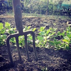 Mijn favoriete tuingereedschap: de spitvork.