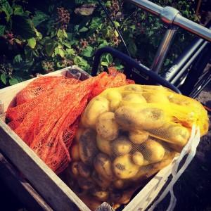 De aardappels kunnen het best droog, koel en donker worden opgeslagen. Zo blijven ze het langst goed.
