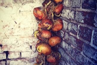 De uienvlecht, hier nog in het lege houthok. Inmiddels is het houthok gevuld en hangen de uien nog maar net droog...