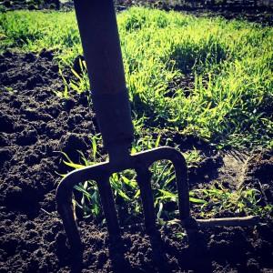 Groenbemesting: planten worden gebruikt om voedingsstoffen vast te houden en/of toe te voegen aan de bodem.