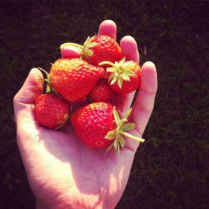 Aardbeien: een van de vele soorten fruit uit de moestuin.